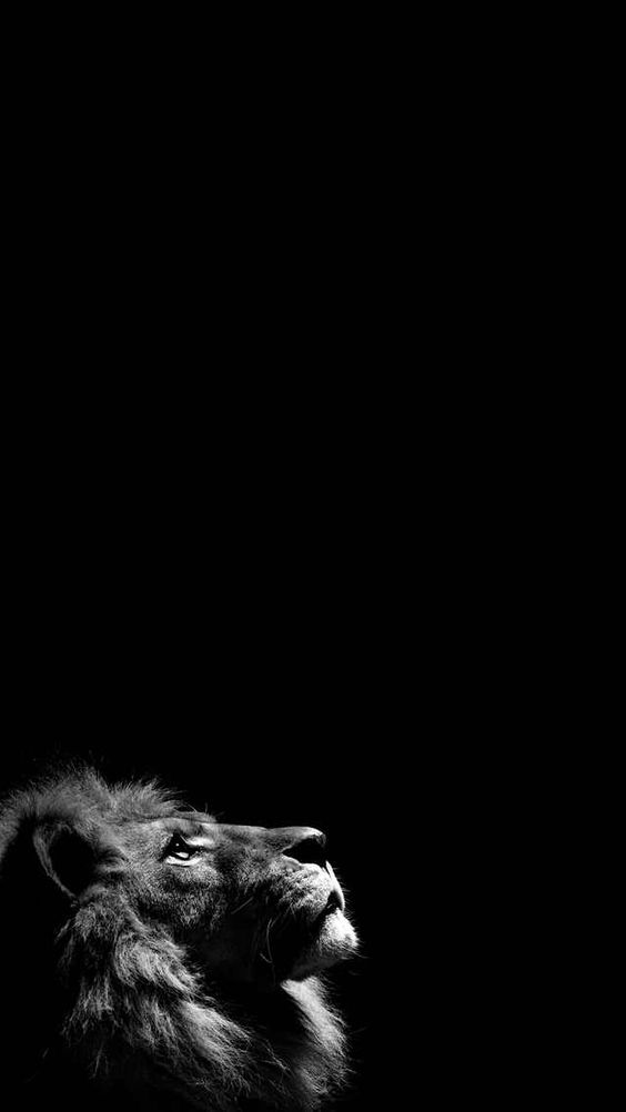 Lion شیر - dark wallpaper